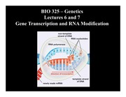 Lesson 6-7 Gene Transcription and RNA Modification