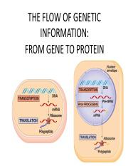 THE FLOW OF GENETIC INFORMATION.pdf