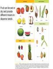 Fruits and seeds(1)