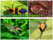 Lecture 22 - Arthropods AP.ppt