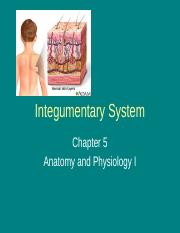 chapter 5 (Integumentary System)