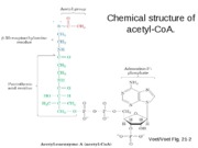 6.PDC-Citric Acid Cycle_2010