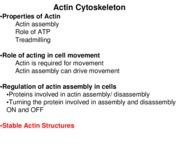 Handout 7 - Stable Actin Structures