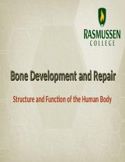 Bone Development and Repair (1).ppt