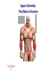 elbow and forearm_3_student version.pptx
