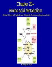 8_CHEM4342-Amino Acid Metabolism.ppt