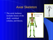 Lab 1 - Anat Ref and Axial Skeleton