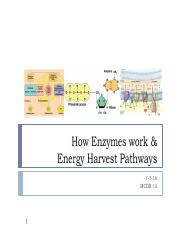 Lecture 7- Enzymes and Energy Harvest notes