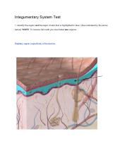 Integumentary System Test.pdf
