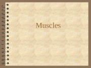 Muscles (1)