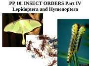 10-insectorders-IV-Lep, Hymen-2014