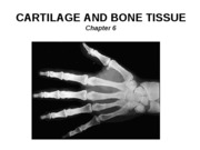05_Cartilage and Bone