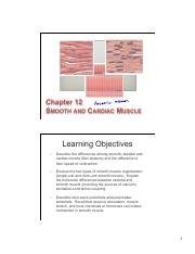 12 Smooth & Cardiac Muscle Physiology slides
