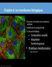 Cours 6 - Membranes I BBL