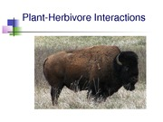 Ecology Plant-Herbivore and Mutualism