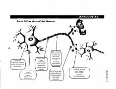 parts of neuron 2.pdf