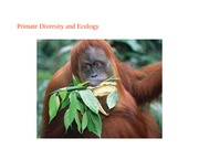 Lecture 1 Primate Intro and taxonomy