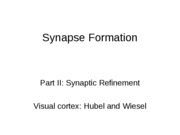 20-Synaptic_refinement