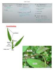 Lab 6- Leaves.docx