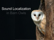 Sound Localization in Barn Owls - Student Presentation - Assignment