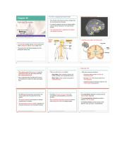 The brain and the nervous system part1