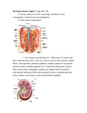 Urinary_System_with_px