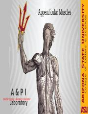 AppendicularMuscles lab.pptx
