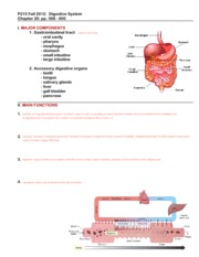 Physiology exam 4 digestive system