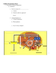 cellular respiration review answer key energy cellular respiration. Black Bedroom Furniture Sets. Home Design Ideas