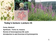 Plant Diversity Lecture 5-(Ferns finished, Intro to Gymnosperms)-110514