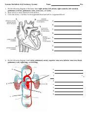 Systems WS4 CircResp.docx - Systems Worksheet#4(Circulatory ...
