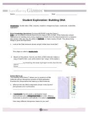 Student Exploration Building Dna Gizmo Answer Key Pdf + My ...