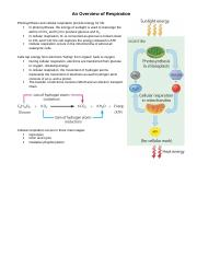 Cellular Respiration Overview .docx