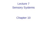 Lecture 7 Sensory Systems