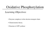 M Oxidative Phosphorylation
