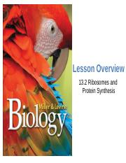 13.2HW - Name Class Date 13.2 Ribosomes and Protein Synthesis Lesson ...
