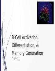 181 - 13 - B Cell Activation