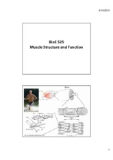 02-muscle structure and function(1).pdf