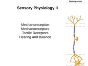 BISC 305 - Lecture 8 (Sensory Physiology 2)