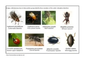 Spiders and Beetles_activity