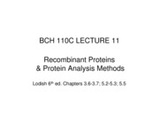 110C Lec11 Recombinant Proteins & Protein Analysis Methods
