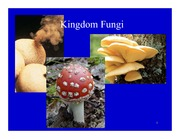 Lecture on Fungi