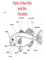 Parts of fish and functions