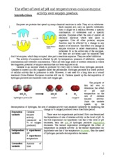 good-enzyme-report-2