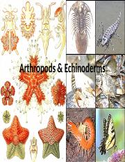 19-Arthropods & Echinoderms.ppt