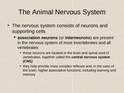 Nervous_sys_FA13_lecture