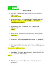 calcvin cycle review-1.docx