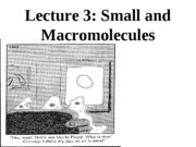 Lecture+3+-+Small+Molecules+and+Macromolecules