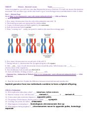 Mitosis and Meiosis internet lessonbio101onli (Lab 12).doc ...
