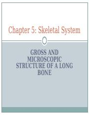 Skeletal_System_Chapter_5_Notes